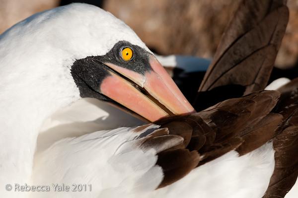 RYALE_Galapagos-144