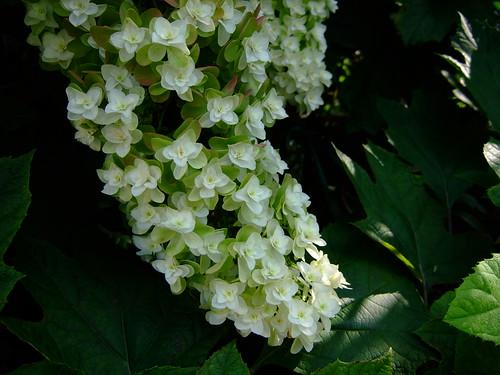 自宅 庭の花