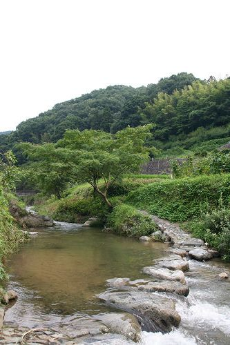 飛鳥川の飛び石@明日香村-04