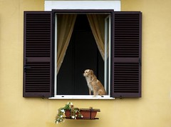"Gaeta - a patient dog watching life go by • <a style=""font-size:0.8em;"" href=""http://www.flickr.com/photos/44919156@N00/5983869283/"" target=""_blank"">View on Flickr</a>"
