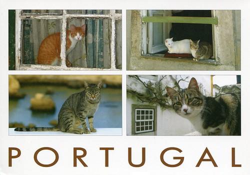 Portuguese Cats
