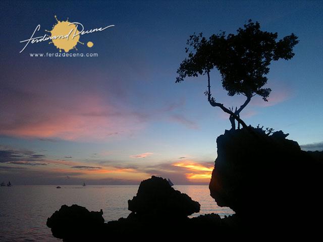 Boracay Lone Tree