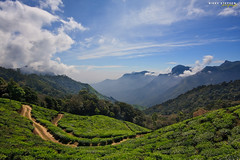 Munnar (djniks) Tags: blue india green estate tea kerala plantation polarizer southindia munnar teaestate sigma1020 cplfilter kolukkumalai topstation canon40d