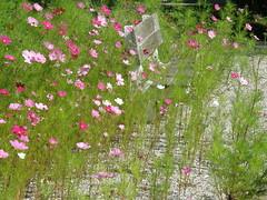 019 (keepps) Tags: summer garden bench schweiz switzerland flora suisse geneva july genve