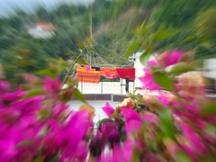 Colore... stupore (Colombaie) Tags: colore estate liguria rosa fiori ameliepoulain rosso fucsia arancione terrazzo caldo colorati panni bouganville 2011 lenzuola caldi cogoleto