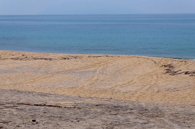 永田浜 ウミガメ上陸痕