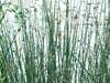 davanti le erbe, dietro lo stagno