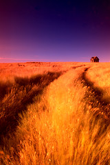 Golden House (Mike Bingley) Tags: summer path farm albertasoutheastalbertaabandonedwheatbluegold
