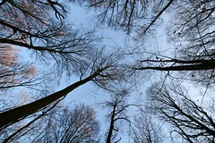 Trees meeting in the forest (Andreas Helke) Tags: 2 test forest canon germany deutschland europa europe soft y sharp example dslr canoneos350d baum picnik twa 1022 toprint 10mm canonefs1022mmf3545usm canon1022 candreashelke lc5 kleinschneen img2892 donothide canondslrlenscomparison popularold mymoreinterestingphotos 2011upload