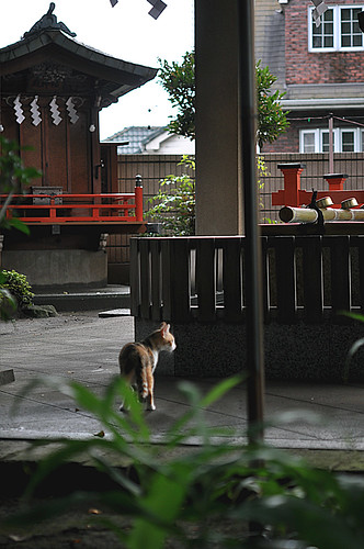 shrine cat