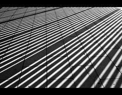 a lot of lines (magicoda) Tags: barcelona shadow blackandwhite bw italy abstract lines spain nikon italia foto geometry stadium bn ombre espana olympic fotografia dslr astratto barcellona biancoenero spagna 2010 catalunia stadio geometria catalogna diagonals d300 linee olimpico diagonali blackwhitephotos magicoda davidemaggi maggidavide