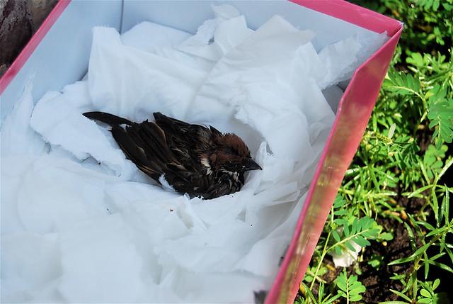 rescued bird