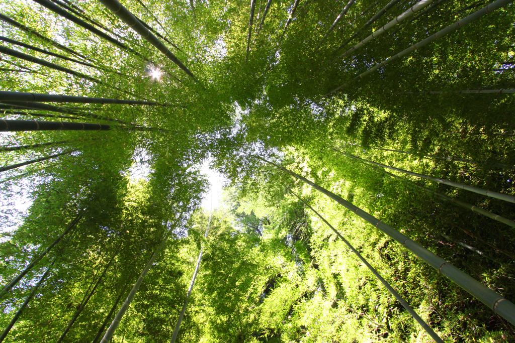 Kita Kamakura Hydrangea spot (3)