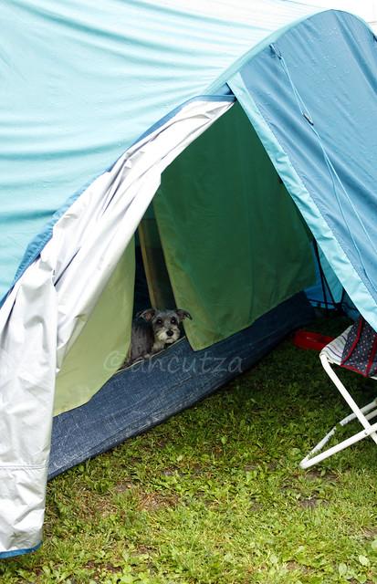 foto viaggiare in tenda con il cane