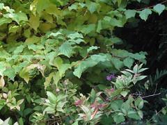 Garden August 2011