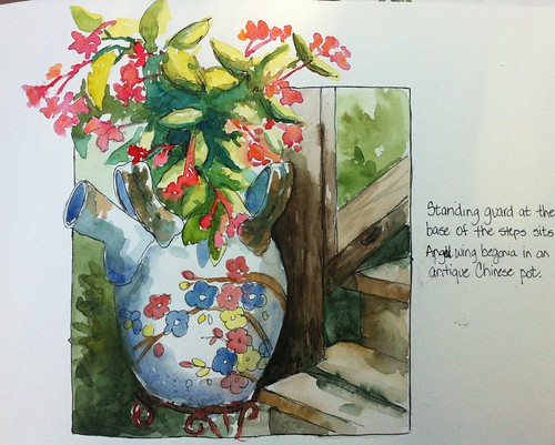 Angel wing begonia in Chinese pot by ddhabicht