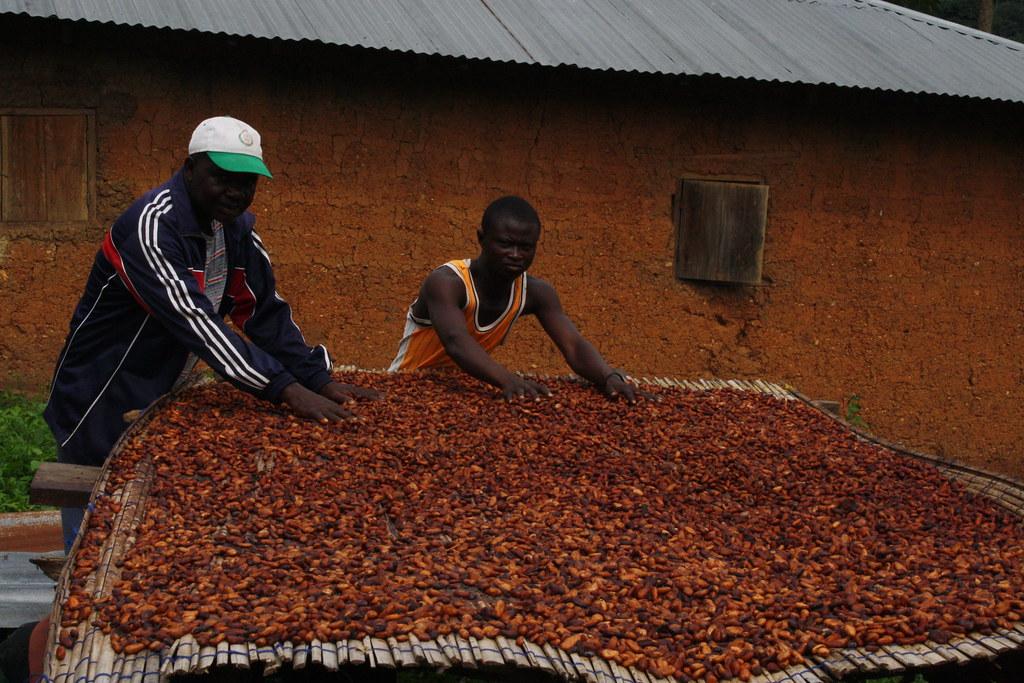Table de séchage cacao Togo