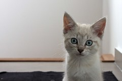 I can't belive that! (Enthuan) Tags: cute cat canon eyes kitten chat kitty minou mignon chaton