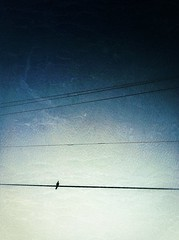 105/365- Alone (elineart) Tags: blue sky bird birds photography wire alone loneliness florida explore wires lone winged app apps group3 iphone odc birdonawire birdsonawire project365 explored birdsoffeather i365 iphone4 iphonography elineart elineartphotography iphone365 ourdailychallenge odc3 ourdailychallengegroup3 snapseed odcalone