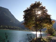 Ahornbäume im Gegenlicht am Haldensee, NGID1091379826 (naturgucker.de) Tags: tirol sterreich naturguckerde cgntherkainz tannheimertalhaldensee ngid1091379826