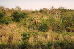 Krueger Nationalpark Sdafrika (gudrunfromberlin) Tags: southafrica sdafrika bigfive kruegernationalpark