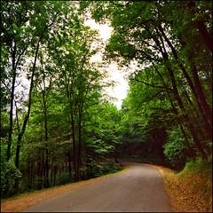 Beauty of lonesome roads - Avala (Katarina 2353) Tags: road trees green film forest photography spring nikon image serbia belgrade beograd srbija avala katarinastefanovic katarina2353