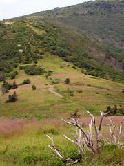 Appalachian Trail (BlueRidgeKitties) Tags: tennessee northcarolina appalachiantrail easterntennessee westernnorthcarolina southernappalachians ccbyncsa janebald canonpowershotsx10is