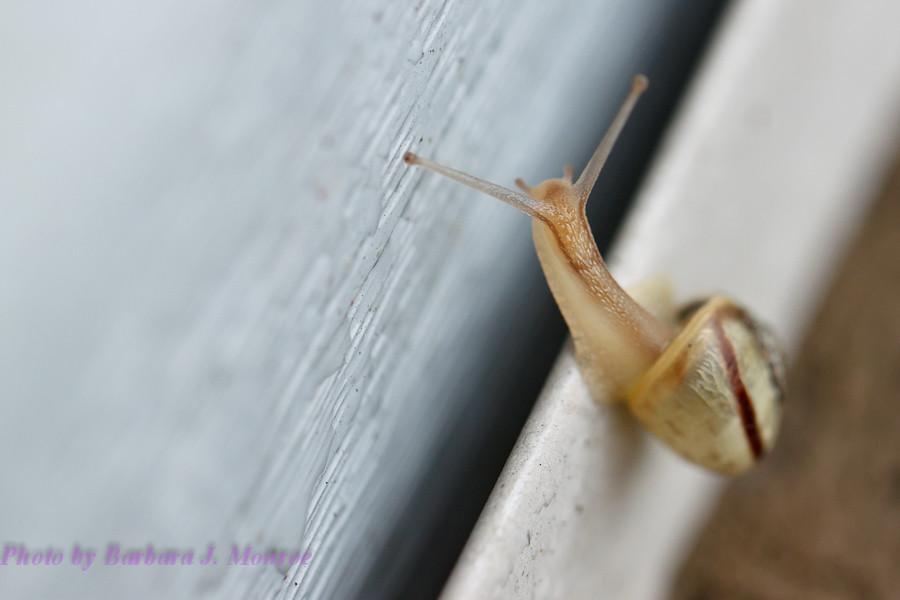 Snail (1 of 2)