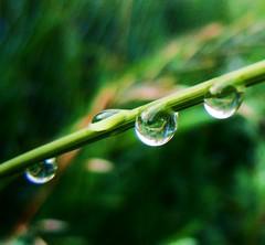 4  [EXPLORE] (Marie Granelli) Tags: macro green drop explore