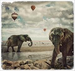 ...había una vez (.¸.·•●✿ ℓυ∂υєη ✿●•·.¸.) Tags: texture digitalart pajaros globos artedigital texturas elefantes subrealismo subreal —obramaestra— luduen