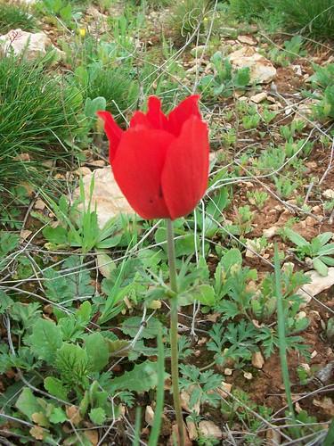 الاردن في الربيع صور 5909340496_d75ba2b997.jpg