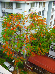 """Fire plant"" (thanks Nick!) in front of Bangladesh International Tutorial (Nii_Djan) Tags: trees rooftop treetops dh"