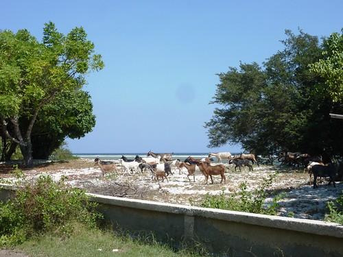 Indo 11-Lombok-Gili Trawangan (9)