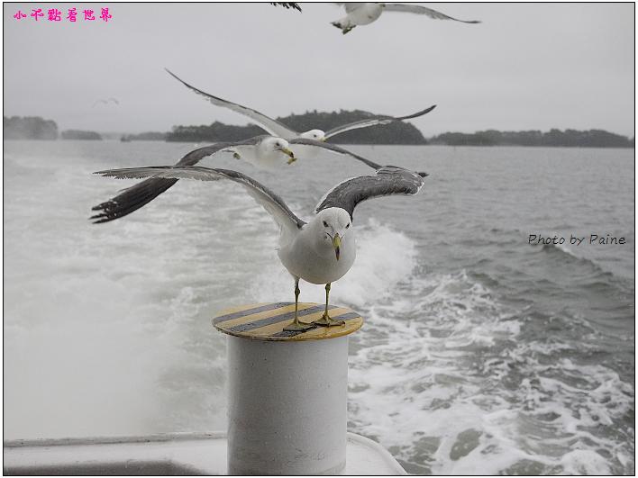 仙台松島遊船餵海鷗-24.jpg