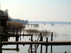 Murtensee 14 (fcharriere) Tags: lake switzerland raw lac olympus roseaux oiseaux morat canards murten murtensee roseraie lacdemorat e620 aperture3 fredericcharriere caricaie