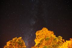 Flames in the Night Sky (reesem226) Tags: longexposure trees sky night contrast stars fire streetlamp tripod wideangle galaxy breeze milkyway tamron1750mm nikond300