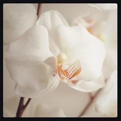 Vintage Polaroid orchids