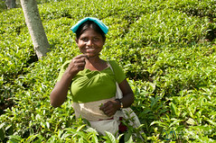 Laughing Tea Picker - Outside Srimongal, Bangladesh (uncorneredmarket) Tags: people women tea bangladesh teaplantation teaestate teagardens aes srimongal teapickers sylhetdivision sreemangal