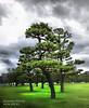 Japanese Tree Bokehrama (Bushido Photo) Tags: japan nikon 14 85mm stitched panorma d700 bokehrama bokerama bushidophoto
