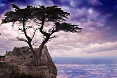 Lone Cypress (Danielle.Victoria) Tags: ocean california storm tree clouds purple pacificocean pebblebeach lonecypress 17miledrive cypress carmelbythesea carmelca thechallengefactory