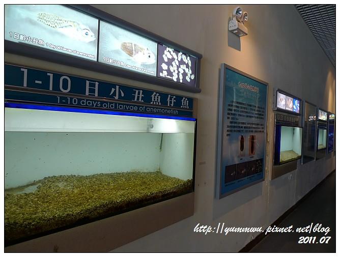 110711小丑魚主題館 (14)