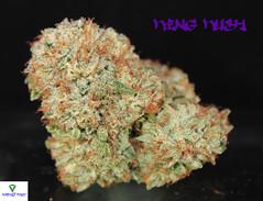 King Kush Nug2 (Humboldt Relief) Tags: weed 420 pot marijuana herb cannabis ganja medicalmarijuana medicalcannabis cannabisindica humboldtrelief