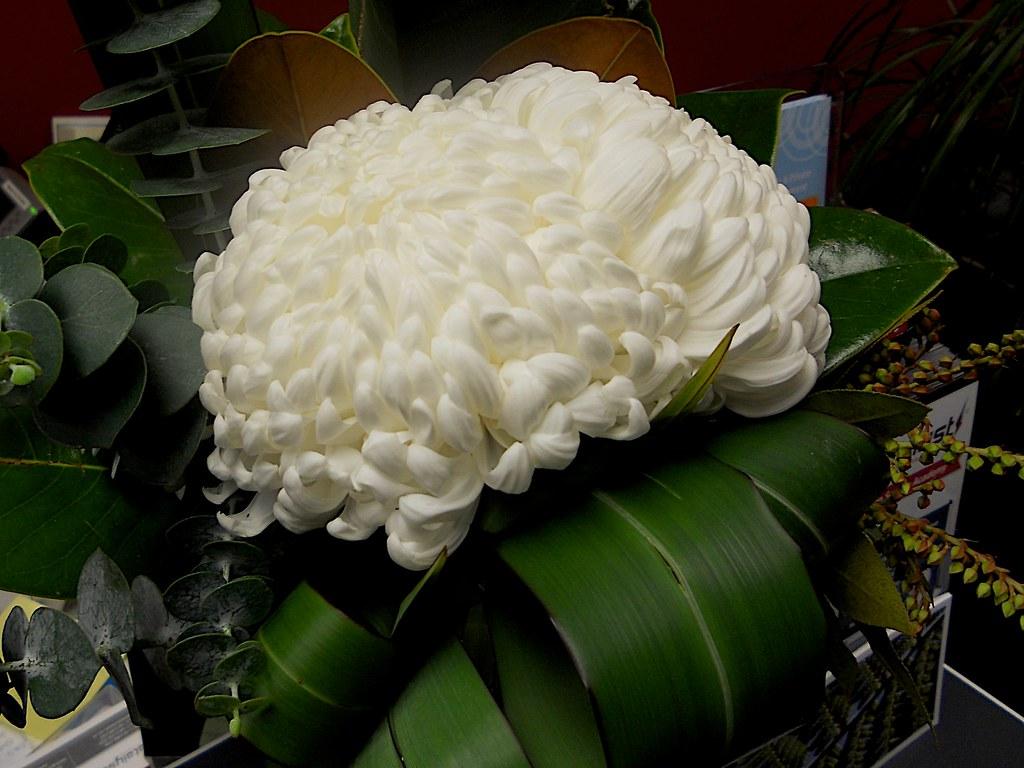 Weekly flower arrangement - 2011-07-19