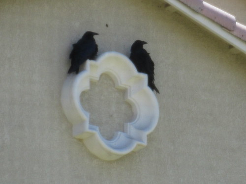 Panda? Crows rest on the decoration on the wall.