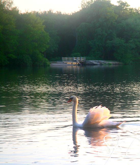 Southard's Pond