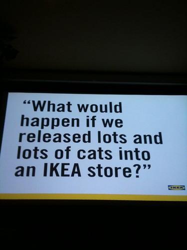 Ikea cats at #kittencamp
