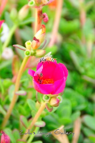 bunga dan kumbang