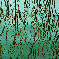 curls on the surface (henk hessel photography) Tags: lake reflection reed explore abstraction woerdenseverlaat