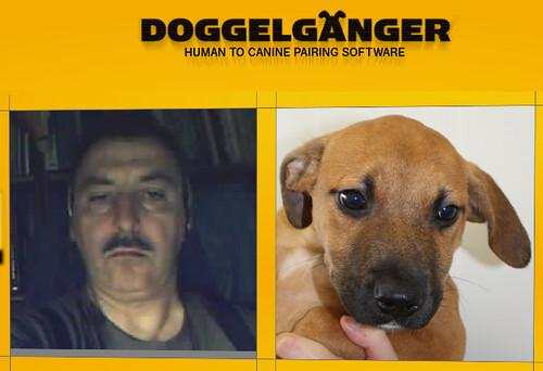 Mi cara de Perro