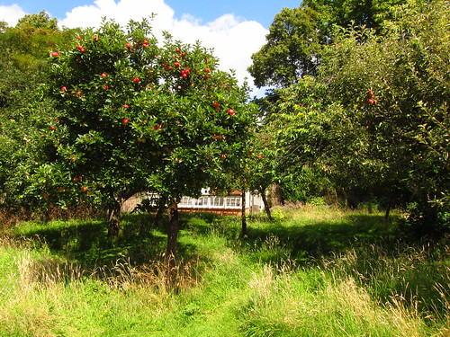 The Apple Orchard at Fenton House